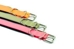Поставки любимчика о резиновых воротниках для любимчика на белизне Стоковое фото RF