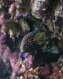 Поставленные точки рыбы бабочки Стоковое фото RF
