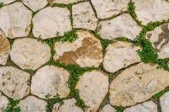 Постаретая каменная кирпичная стена с зелеными лист плюща в Matera, Италии используя Стоковое Изображение RF