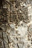 Постаретая предпосылка расшивы текстурированная древесиной Стоковая Фотография RF