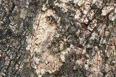 Постаретая текстура коры дерева Стоковая Фотография RF