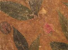 Постаретая handmade текстура коричневой бумаги с гербарием листьев Стоковое Изображение
