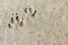 Постоянные следы ноги Стоковые Изображения