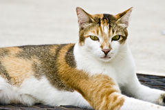 поступайте кот наилучшим образом Стоковые Фото