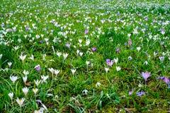 Посыльные весны Стоковое фото RF