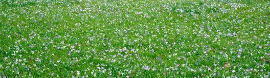 Посыльные весны Стоковые Изображения RF