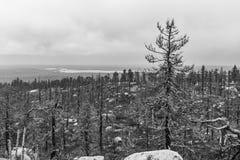 После лесного пожара черная белизна стоковые фото