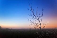 После захода солнца в туманном поле лета Стоковое фото RF
