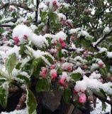 Последнее замораживание весны усилило дерево после естественного катаклизма Стоковые Изображения
