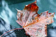 последние листья Стоковые Фото