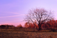 Последние цвета осени Стоковое Изображение RF