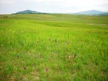 Последний ландшафт весны в горах Стоковое Фото