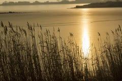 Последний восход солнца озера зим стоковые фотографии rf