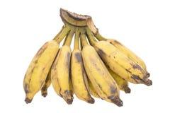 Последний зрелый банан Стоковые Фото
