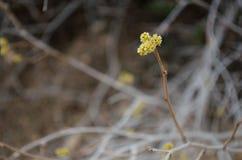 Последняя весна Стоковое Фото