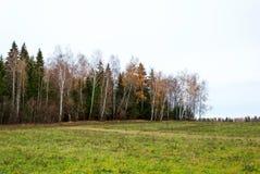 Последняя осень в сосновом лесе, ландшафт Стоковая Фотография RF