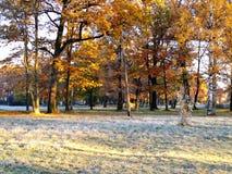 Последняя осень Стоковые Фотографии RF