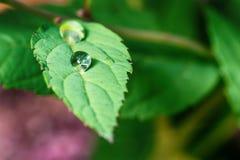 После дождя в природе Стоковое Изображение RF