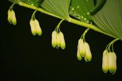 После дождя лета фото макроса воды падает (роса) на стержни и листья зеленых растений Стоковые Фотографии RF