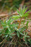 После дождя лета фото макроса воды падает (роса) на стержни и листья зеленых растений Стоковое Изображение