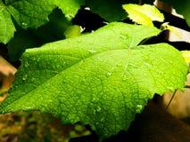После дождя Стоковые Изображения