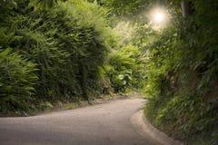 После полудня зеленого пути Стоковая Фотография RF