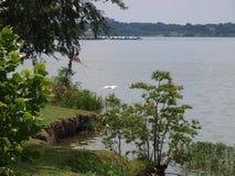 После полудня на озере Стоковые Изображения