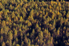После полудня осени в горах Стоковое Фото