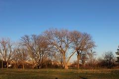 После полудня парка с деревьями Стоковые Изображения RF