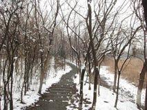 После снежка Стоковое Изображение RF