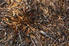 после травы сгорел Стоковое Фото