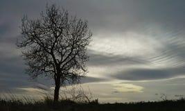 После шторма весны Стоковые Изображения RF