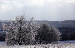 После шторма льда Стоковое Фото