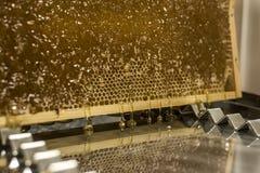 Потеки меда лоснистого желтого золотого зеркала отражения гребня меда сладостные пропускают во время предпосылки сбора с textspac Стоковое Изображение