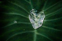 Потеки плавая в зеленые листья Стоковое Фото