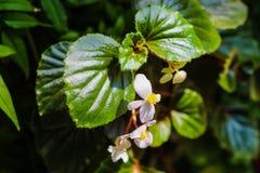 Потеряйте вверх цветков жасмина садом весной или летом стоковое фото rf