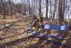 потерянная собака Стоковые Фотографии RF