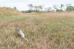 Потерянное перо птицы Стоковое Изображение
