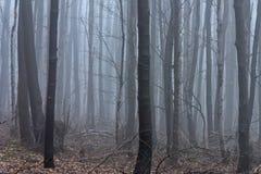 Потерянный в тумане 03 Стоковые Фотографии RF