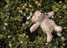 Потерянный или покинутый плюшевый медвежонок Стоковые Изображения