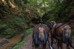 Потерянный каньон спрятанный самоцвет Dell Висконсина с Hors Стоковые Изображения RF