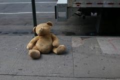 Потерянный медведь в центре города стоковая фотография rf