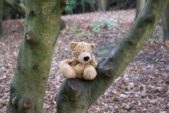 Потерянный медведь в древесинах Стоковое Изображение