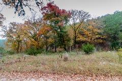 Потерянный парк штата кленов в Техасе Стоковое Фото