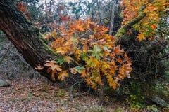 Потерянный парк штата кленов в Техасе Стоковое Изображение