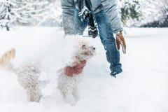 Потеха боя снежного кома с любимцем и его владельцем в снеге зима ho стоковое изображение rf