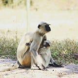 потеха ребенка имея мать влюбленности Стоковые Фото