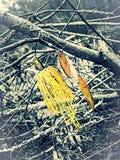 Потеха рыбной ловли стоковые изображения