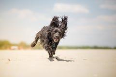 потеха собаки Стоковые Фото