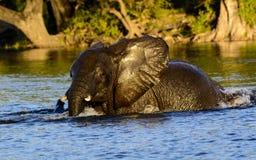 потеха слона copenhagen имея звеец воды Стоковые Фото